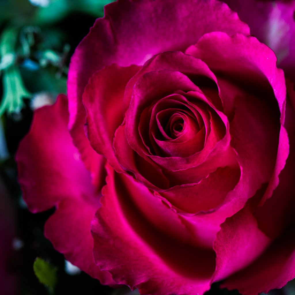 Blumen-20150131-0588.jpg